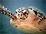 francescosaraceno-tortue.jpg